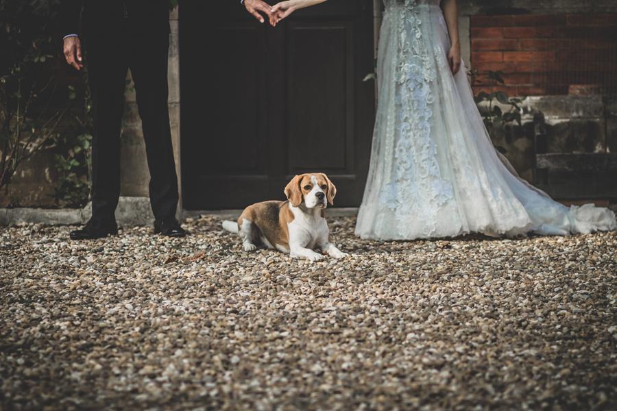 fotos de boda en la casona de las fraguas cantabria perro